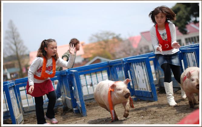 子豚レース2